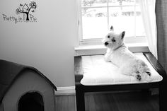 westie, dog, terrier, black & white, west highland terrier