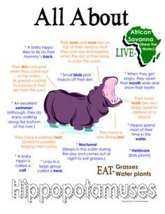 "My All About Hippopotamuses Book - African Animal Unit Study from Courtney McKerley on TeachersNotebook.com - (9 pages) - This ""All About Book"" will be a fun addition to your classroom and lesson on hippopotamuses. This packet can be used along with books specific to the animal or it can be used on its own. Other animals you will see in the African series include Elephant, G"