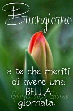 Italian Memes, Italian Quotes, Good Morning Good Night, Day For Night, Good Day Quotes, Quote Of The Day, Italian Language, Morning Greeting, Emoticon
