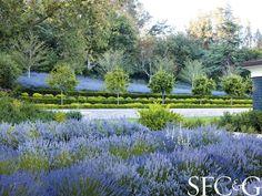 Andrea Cochran Coaxes the Grounds of an Atherton Property into a Sublime Formal Garden - San Francisco Cottages & Gardens - May 2014 - San Francisco