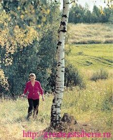 Деревья лечат