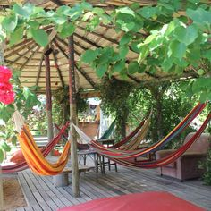 Eco Hostel Algarve, Portugal. Come and stay at our organic sustainable hostel