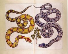 Snakes. Illustration from a famous 18th-century work of reference, edited by Albertus Seba, a Dutch pharmacist and collector of zoological and other natural subjects.