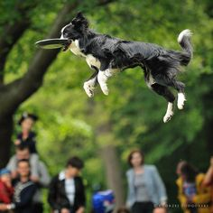 """Click visit site and Check out Best """"Border Collie"""" T-shirts. This website is top-notch. Tip: You can search """"your name"""" or """"your favorite shirts"""" at search bar on the top."""