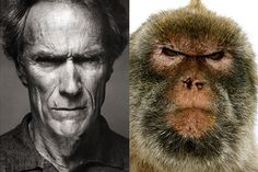 Well, there is another kind of lookalike that do not seek fame and requires a bit more imagination; have you heard of animals that look like celebrities? Description from somepets.com. I searched for this on bing.com/images