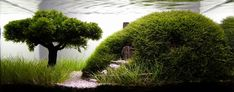 Relaxing-Aquascaping