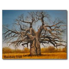 Postcard Baobab Tree - Stop and enjoy the scenery. Baobab Tree, Tree Artwork, Wedding Color Schemes, Postcard Size, Invitation Cards, Holiday Cards, Art For Kids, Create Your Own, Art Pieces