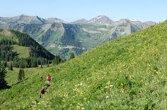Hiking through wildflowers.