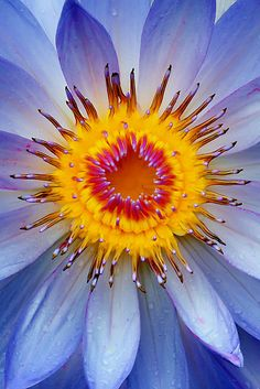 ~~Sun and Rain ~ water lily macro by Margaret Barry~~