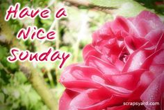 Have A Nice Sunday good morning sunday sunday quotes happy sunday good morning sunday sunday images sunday pictures sunday quotes and sayings