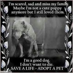 Pitbulls ARE NOT BAD DOGS!Rescue a dog the next time you want a pet. I almost cried when I saw this. Shelter Dogs, Rescue Dogs, Animal Rescue, Animal Adoption, Animal Testing, Save Animals, Animals And Pets, Funny Animals, Cute Puppies