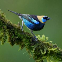 Enjoy Nature +☀️=  Colorful Golden Hooded Tanager, Mexico