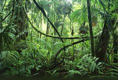 Li_Into the Jungle Small.jpg (709×480)