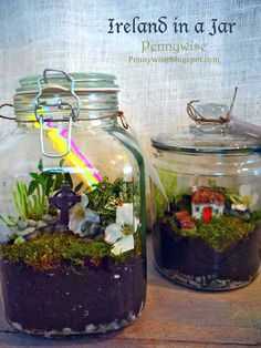 Irish Terrariums