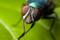 Image result for fly