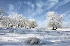 The beautiful and classical winter season snow in Russia, nature hd photography.