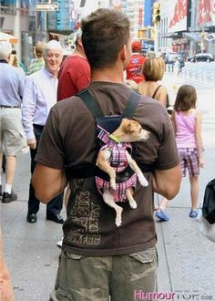 Photo rigolote d'un mec qui balade son petit chien dans les rues de New York accroché comme un sac à dos à son dos