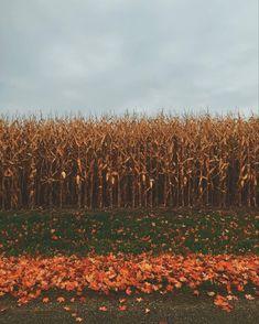 Autumn Cozy, Happy Autumn, Fall Wallpaper, Autumn Photography, Travel Photography, Fall Pictures, Fall Photos, Hello Autumn, Autumn Inspiration