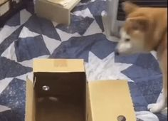 Much box. Not stuck. Nothing to see here move along. Move Along, Picture Video, Cute Pictures, Puppies, Make It Yourself, Box, Animals, Babies, Cubs
