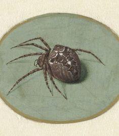 Spider, Jan Augustin van der Goes, 1690 - 1700 - Rijksmuseum