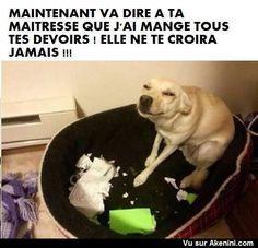 Chien qui a mangé les devoirs d'école - Go ahead tell them i ate your homework - Dog