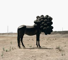 Horse and balloons.