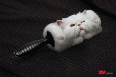Kitty Lint Brush