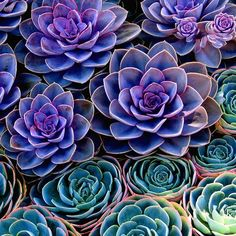 succulents in purple and green