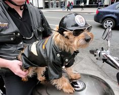 motorcycle dogs - Google Search