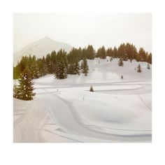 Trail, snow and trees | Photographer: Matt Crabtree