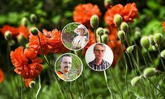 Rakenna riukuaita   Meillä kotona Joko, Dandelion, Flowers, Plants, Dandelions, Plant, Taraxacum Officinale, Royal Icing Flowers, Flower