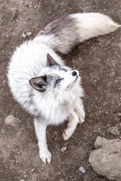 Dog And Puppies Together .Dog And Puppies Together Cute Funny Animals, Cute Baby Animals, Animals And Pets, Foxes Photography, Pet Fox, White Fox, Fluffy Animals, Cat Memes, Animal Drawings