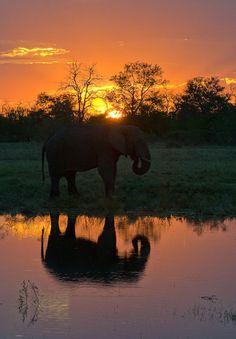Gentle Giant...elephant at sunset