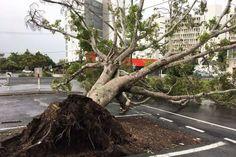 Tree down in Mackay