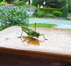 Sur la rambarde en bois, juste devant la porte de la maison, une visiteuse inattendue...