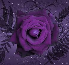 Discover & share this Rose GIF with everyone you know. GIPHY is how you search, share, discover, and create GIFs. Purple Haze, Purple Roses, Shades Of Purple, Exotic Flowers, Small Flowers, Rose Flowers, Happy Birthday Ballons, Rose Violette, Colors And Emotions