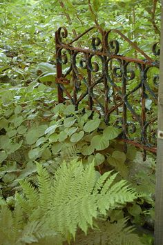 What a great old garden gate!