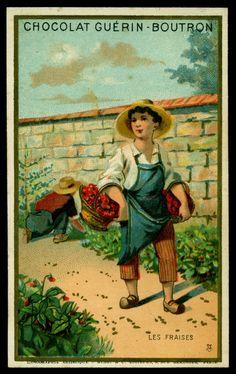 "https://flic.kr/p/pMbNDC | French Tradecard - Children Picking Strawberries | Chocolat Guerin-Boutron ""children Picking Fruit"" c1900 Picking Strawberries"