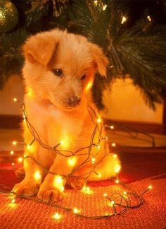 So cute merry Christmas!