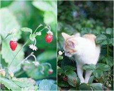 Herzenswärme Cats, Animals, Heart, Gatos, Animales, Animaux, Animal, Cat, Animais