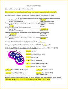 007 photosynthesis pdf worksheet Google Search BIOLOGY
