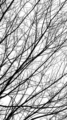 Tree Branches - black & white patterns in nature; organic texture inspiration
