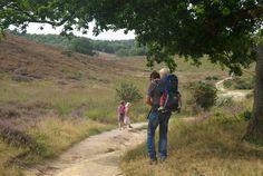 Op zoek naar een wandeling met kinderen door een van de mooiste gebieden van Nederland? Dan moet je naar de Posbank op de Veluwe. Lees de tips van Fieke.