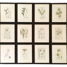 Set of 12 19th Century Botanical Engravings - Decorative Collective