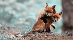 Fox Wallpapers High Quality Pictures of Fox in Stunning