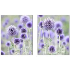 Purple Flower Print Set, Periwinkle Flower Photo, Thistle Flower... (115 ILS) ❤ liked on Polyvore featuring home, home decor, wall art, mounted wall art, purple wall art, interior wall decor and photo wall art