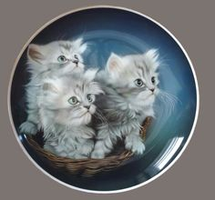 Xiangbo Yang Hand Painted Pottery, Pottery Painting, Painted Porcelain, What's New Pussycat, Pencil Art Drawings, China Painting, Vintage Cat, Cat Art, Pet Birds