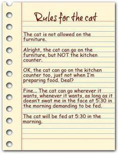 Cat's rules