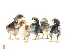 Animal fine art originals and premium quality prints by JadeWuStudio Watercolor Bird, Watercolor Animals, Watercolor Paintings, Original Paintings, Wildlife Paintings, Wildlife Art, Baby Chicks, Art Reproductions, Painting Techniques