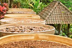 Spice plantation in Bali, Indonesia